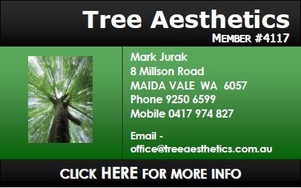 Tree Aesthetics