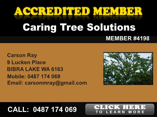 Caring Tree Solutions