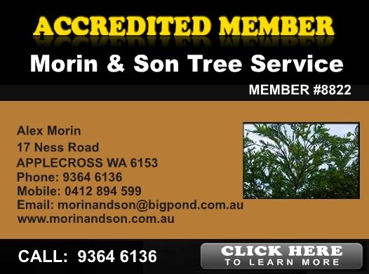 Morin & Son Tree Service